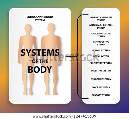 humen endocannabinoid system stock vector royalty free 1247413639