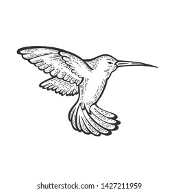 Humming bird animal sketch engraving vector illustration. Scratch board style imitation. Hand drawn image.
