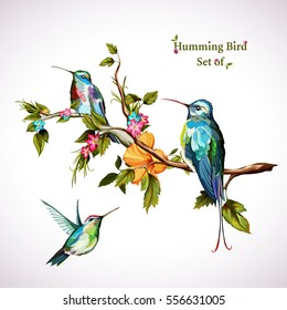 Humming birds. Set of three humming bird. Hand drawn, watercolor. All objects are separated and easy to move. Vector - stock.