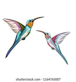 Humming birds. Set of two exotic tropical humming bird. Hand drawn illustration.