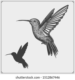 Hummingbird colibri bird silhouettes, logos, emblems and design elements.