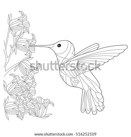 Hummingbird Colibri Coloring Book Adults Vector Vector de stock ...