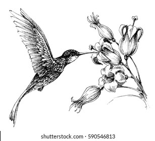 Hummingbird in flight drawing