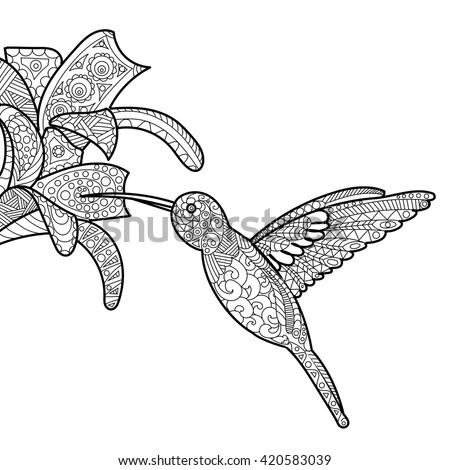 Hummingbird Flower Coloring Book Adults Vector Stock Vector Royalty