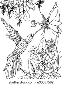 Hummingbird flying under the flowers and drinking nectar. Zentangle, doodle and line art. Coloring book page for adult.