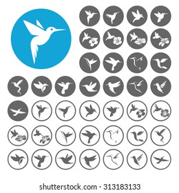 Hummingbird icons set. Illustration EPS10
