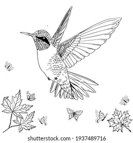 Hummingbird mandala. Adult coloring book pages. Hummingbird black and white line art illustration for coloring book pages. Hummingbird vector illustrations for kids.