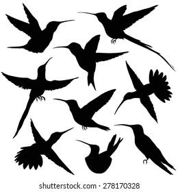 Hummingbird Silhouette. vector illustration. isolated on white
