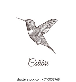 Hummingbird sketch hand drawing. colibri vector illustration of a bird