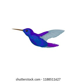 Hummingbird, tiny colibri with bright blue plumage vector Illustration on a white background