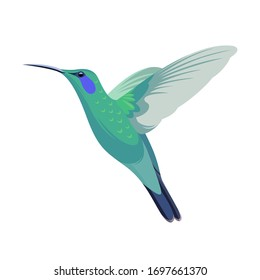 Hummingbird vector illustration. Flat design.