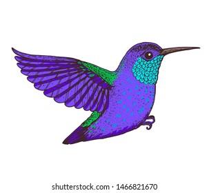 Hummingbird vector illustration. Hand drawn flying colibri bird. Colorful illustration.