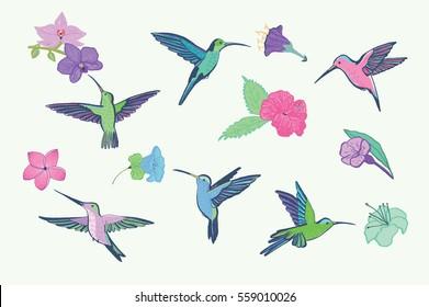 hummingbird vector pattern