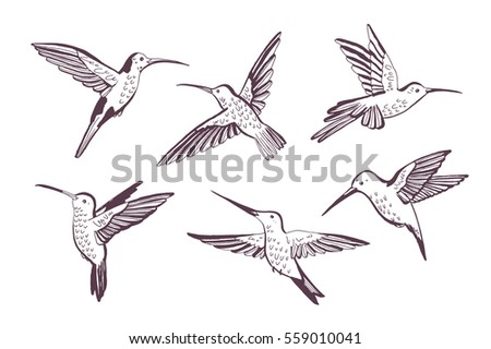 hummingbird vector pattern stock vector royalty free 559010041
