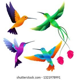 Hummingbirds collection. Exotic tropical little birds flying vector cartoon set