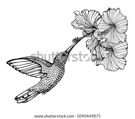 Hummingbirds Flower Vector Illustration Hand Drawing Stock Vector