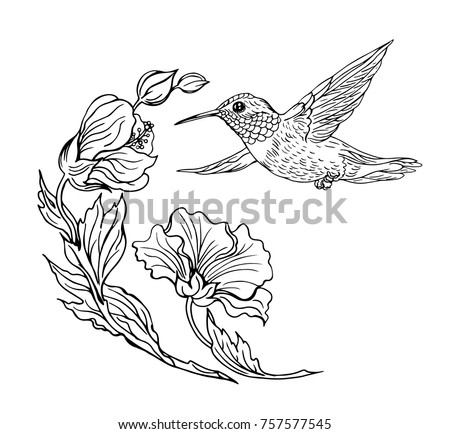 Hummingbirds Flowers Black White Contour Drawing Stock Vector