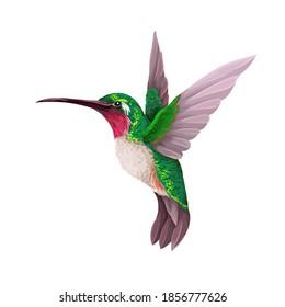 Hummingbirds isolated. Trendy vector print.