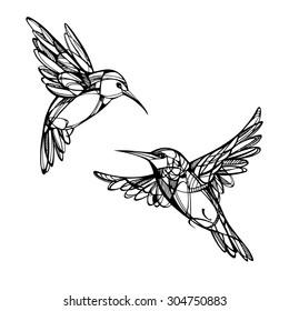 Hummingbirds. Isolated vector
