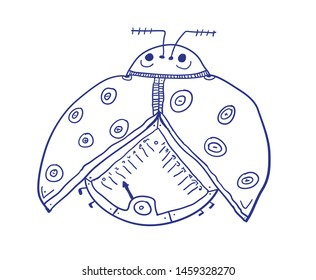 Humorous insect. Coccinellidae or ladybug, ladybirds. Vector illustration.