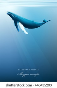 Humpback whale swimming under the blue ocean surface vector illustration