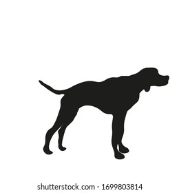 hunting dog with spots, vector illustration