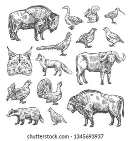 Hunting sport, birds and animal isolated sketches. Vector lynx and buffalo, hazel grouse and partridge, woodcock and blackcock. Quail and badger, duck, capercaillie, fox and squirrel, bison and bobcat