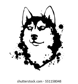 Husky. Black and white illustration. Vector isolated