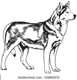 Husky dog breed vector illustration. Dogs of this breed take part in the Sled dog racing, winter dog sport in the Arctic regions of the United States, Canada, Russia and some North Europe