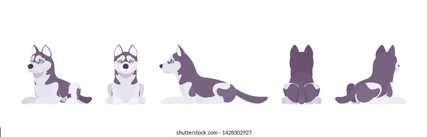 Husky dog lying. Northern sled, medium size compact Siberian breed, cute family companion for active fun and home security. Vector flat style cartoon illustration, white background, different views