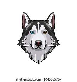 Husky dog portrait. Husky head. Dog breed. Vector illustration. Dog with different colored eyes. Siberian husky with multi-colored eyes.