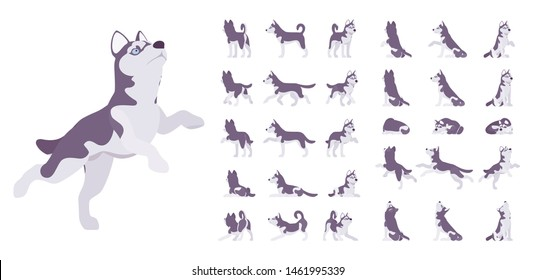 Husky dog set. Northern sled, Siberian breed, cute family companion for active fun and home security. Vector flat style cartoon illustration isolated on white background, different views and poses