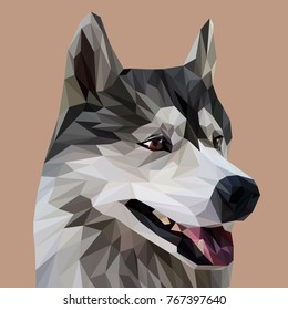 Husky low poly design. Triangle vector illustration.
