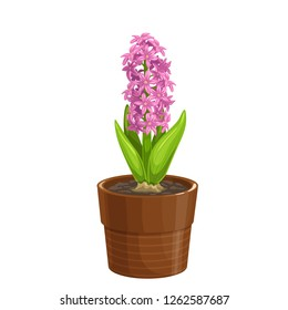 Hyacinth icon in cartoon style. Garden flower