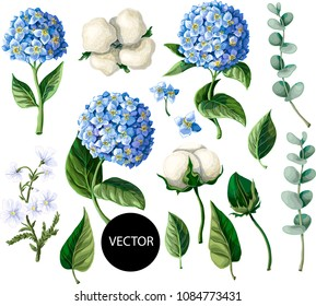 Hydrangea, cotton flowers and eucalyptus branch, isolated on white background. Vector illustration