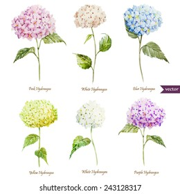 hydrangea, watercolor, flowers, cards, set