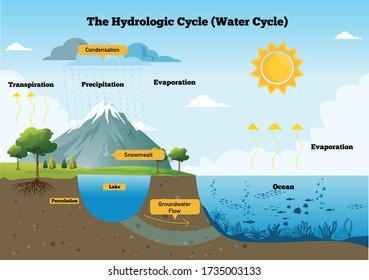the hydrological cycle process visually for learning course. water, hydrological, cycle, infographic, and landscape. Vector flat illustration