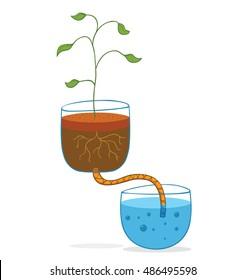 hydroponic concept