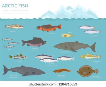 Ice sheet and polar desert biome. Terrestrial ecosystem world map. Arctic animals, birds, fish and plants infographic design. Vector illustration