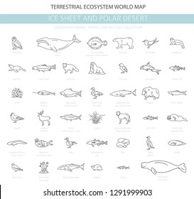 Ice sheet and polar desert biome. Simple line style. Terrestrial ecosystem world map. Arctic animals, birds, fish and plants infographic design. Vector illustration