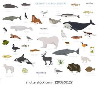 Ice sheet and polar desert biome. Terrestrial ecosystem world map. Arctic animals, birds, fish and plants infographic design. Vector illustration
