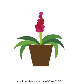 Icon in flat design hyacinth