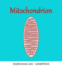 icon in flat style mitochondrion