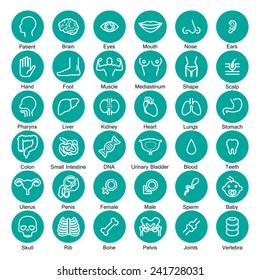 icon organ medical set