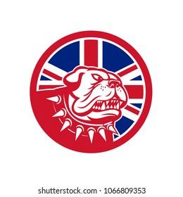 Icon retro style illustration of head of an English Bulldog or British Bulldog waering spiked collar with United Kingdom UK, Great Britain Union Jack flag set inside circle on isolated background.
