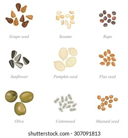 Icon set of oil seeds and oil fruits / Solid fill set of oil seeds and olives