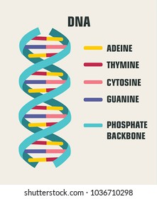 Icon of the structure of the DNA molecule. Spiral Deoxyribonucleic acid (DNA) with the description of components: cytosine, guanine, adenine, thymine, nitrogenous base of DNA.