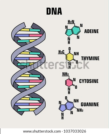 Icon Structure Dna Molecule Spiral Deoxyribonucleic Stock Vector