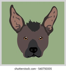 Icon with xoloitzcuintli dog. Vector illustration in flat style.