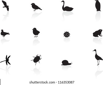 Icons of birds and insects